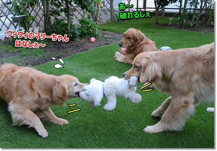 DSC_8452yaburechau.jpg