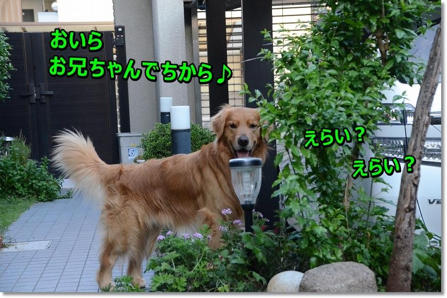 DSC_8467_20160705220122124.jpg