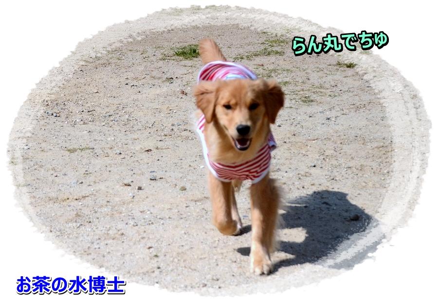 DSC_8571achanomizu.jpg