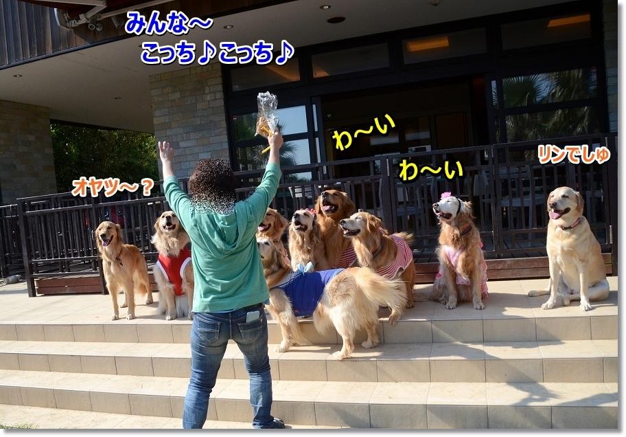DSC_8643_20160521220950802.jpg
