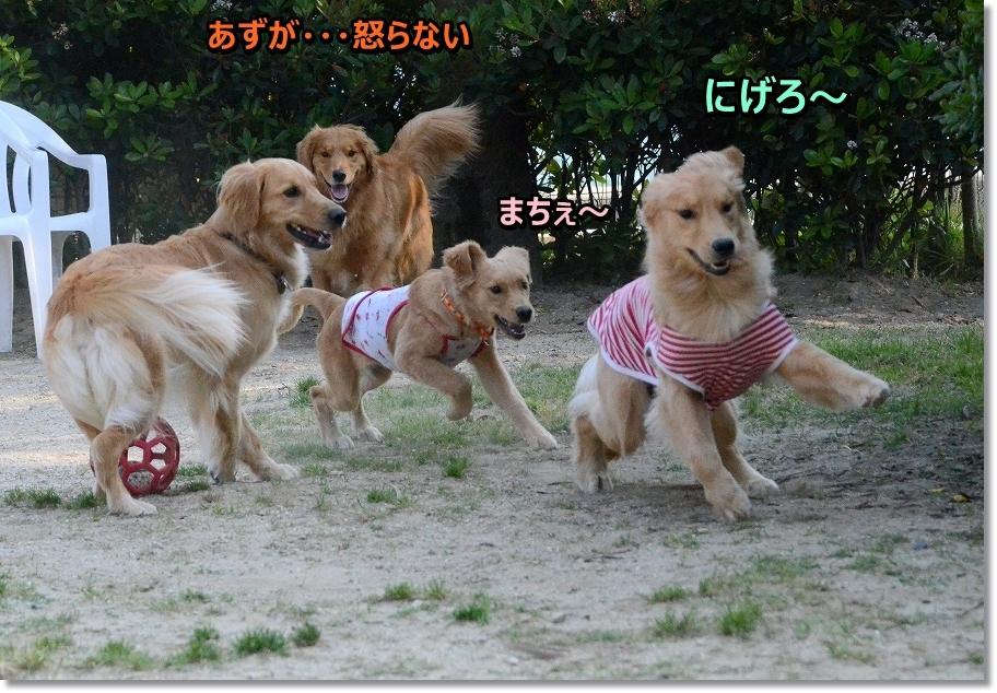DSC_8713okoranaiazu.jpg