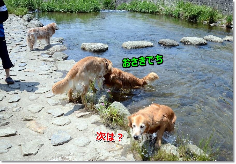 DSC_8921_20160610203444080.jpg