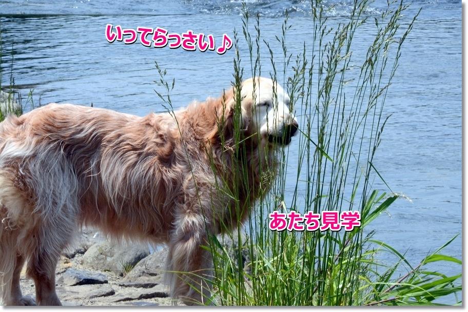 DSC_8925kengakune.jpg