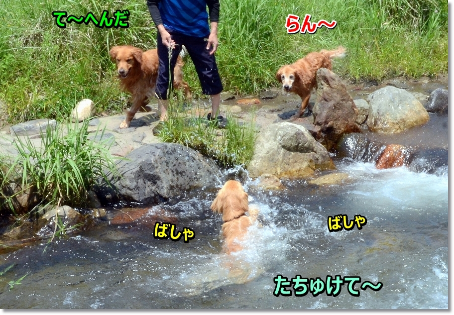 DSC_8933daijoubu.jpg