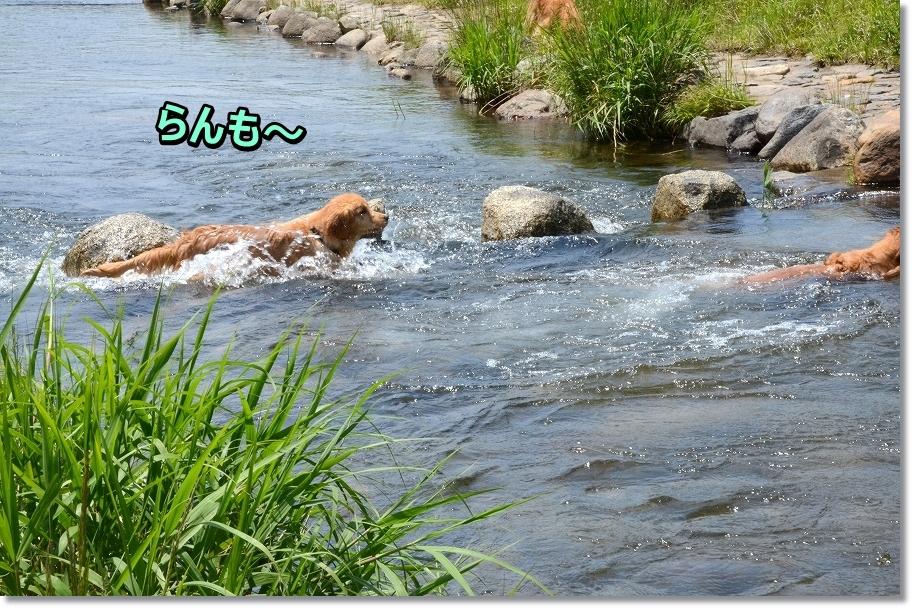 DSC_8966_20160610203626c51.jpg