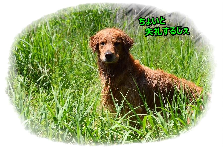 DSC_9052samukunainoka.jpg