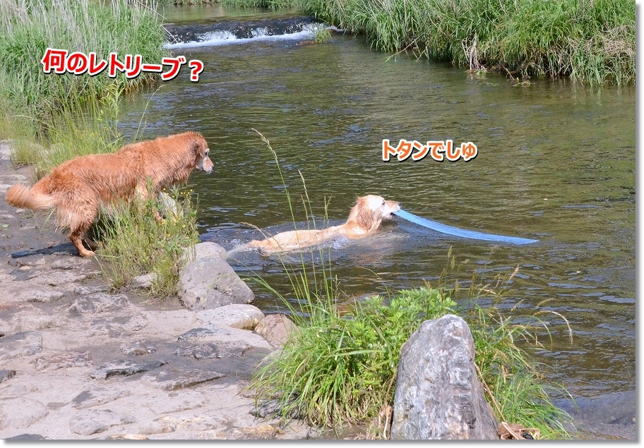 DSC_9221_201606130045481a1.jpg