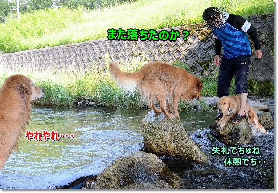 DSC_9234_20160613004548c8b.jpg