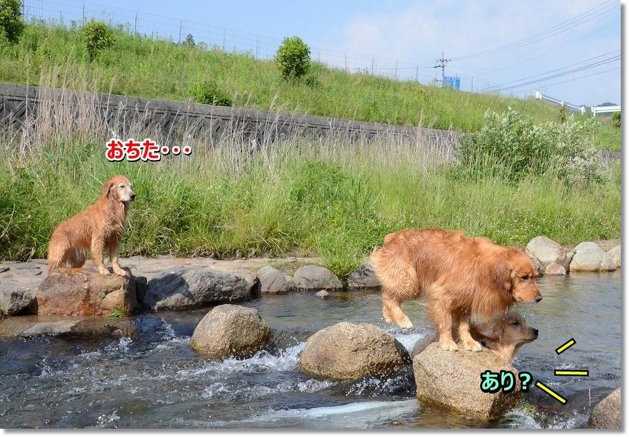 DSC_9255_20160613004611581.jpg