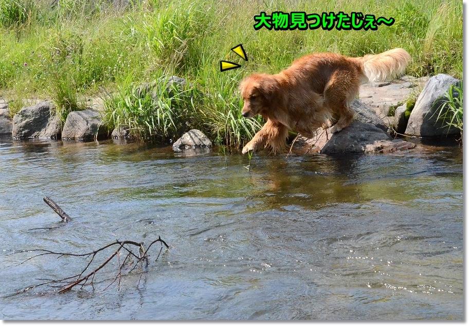 DSC_9261_2016061300461401b.jpg