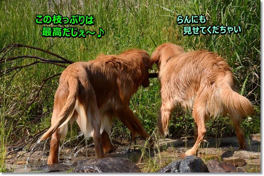 DSC_9270.jpg