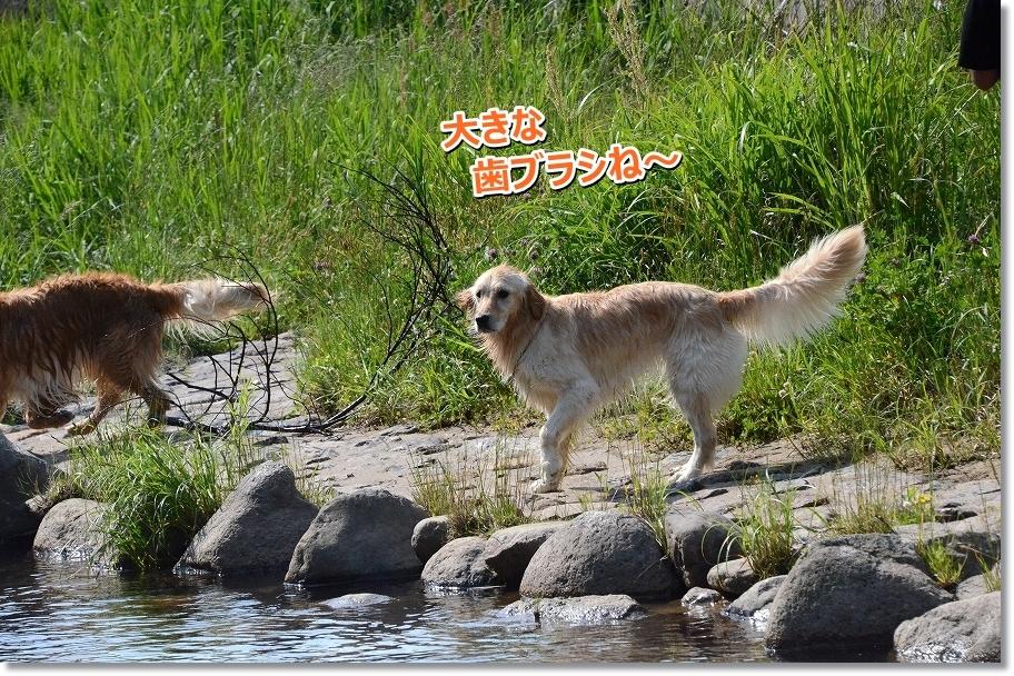 DSC_9331_201606130047076f5.jpg