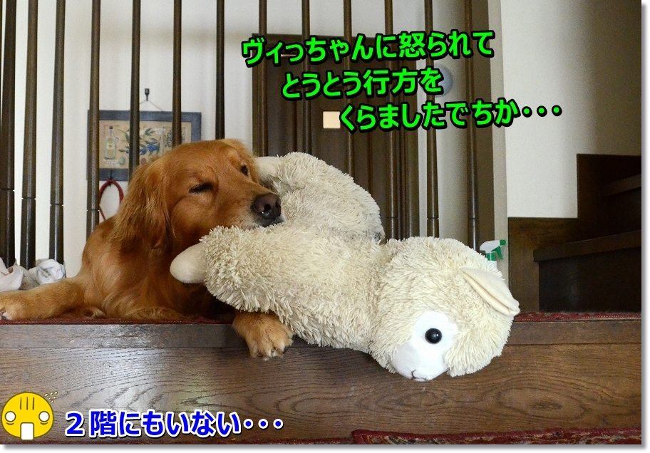 DSC_9464_201607112133227d6.jpg
