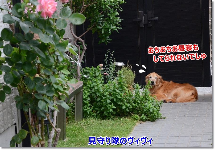 DSC_9470_20160711213400057.jpg