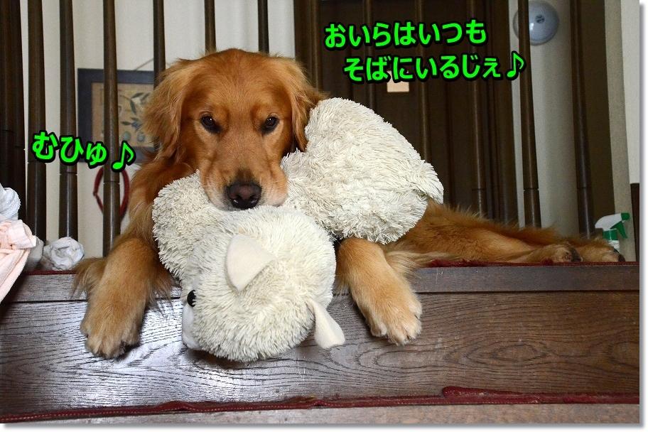DSC_9474_20160711213403a70.jpg