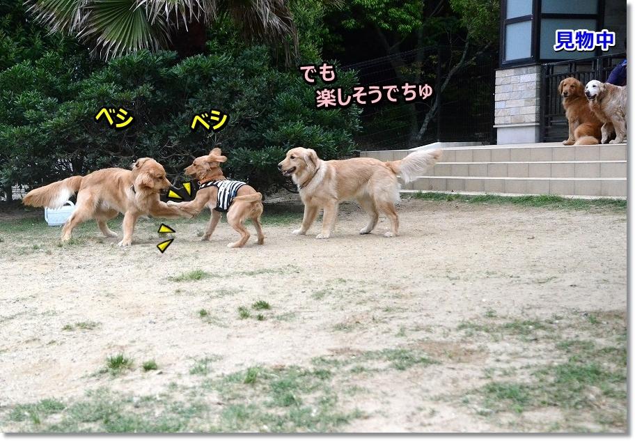 DSC_9523hangeki.jpg