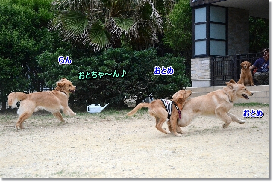 DSC_9557nakayosi.jpg