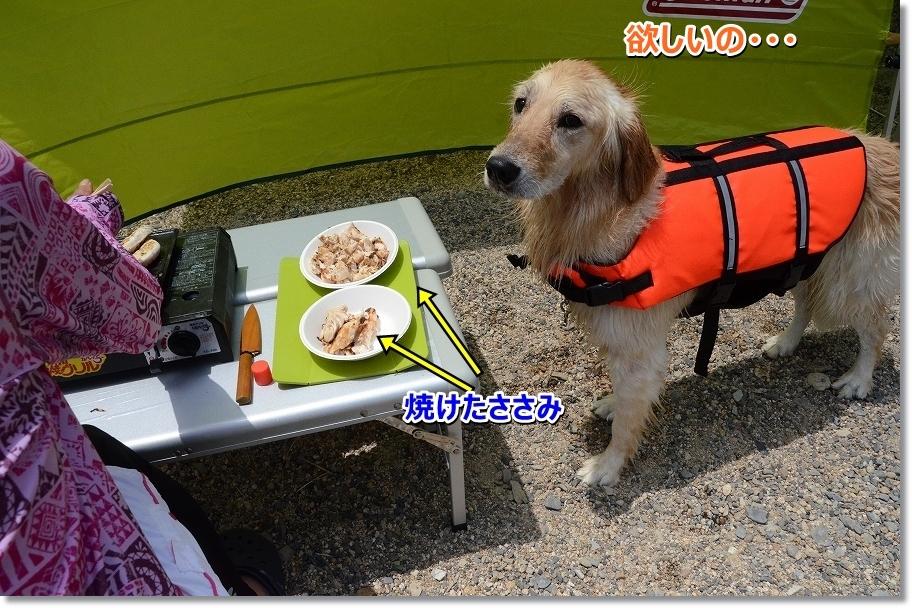 DSC_9797hosino.jpg