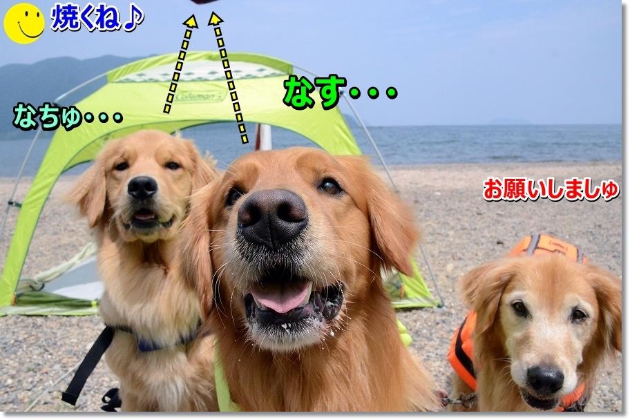 DSC_9830yakune.jpg