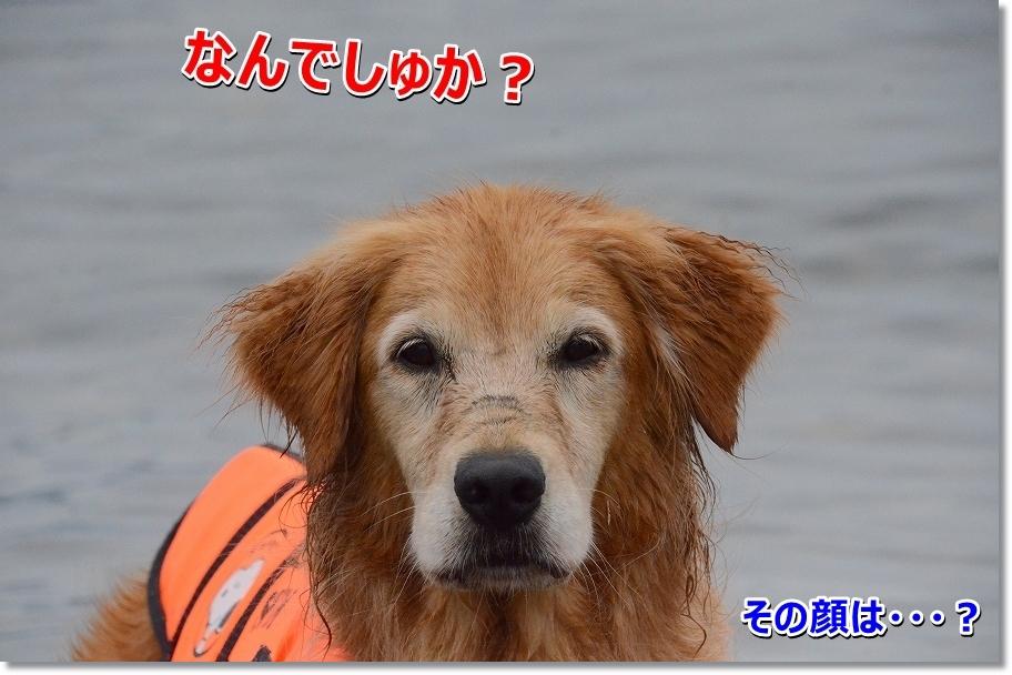 DSC_9865nanika.jpg