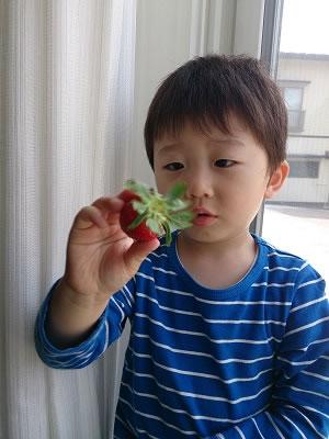 初イチゴ1
