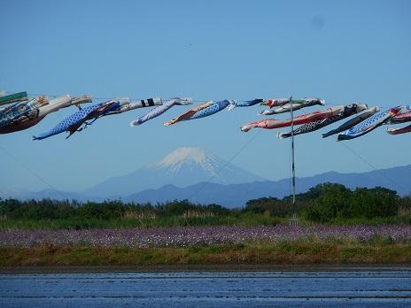 ②鯉のぼりと富士山