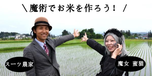 rice_sum5.jpg