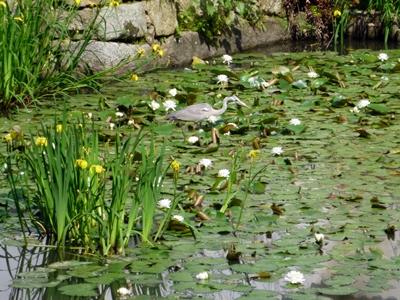 丸亀城_池と鷺