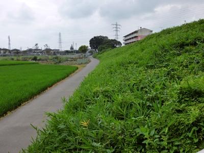 忍城_石田堤4