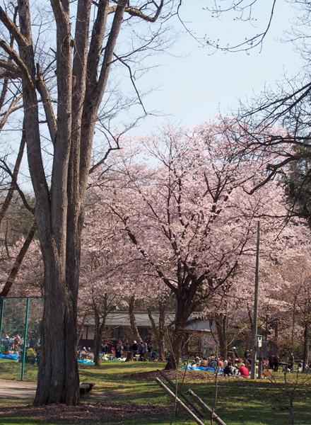 hanamii12.jpg