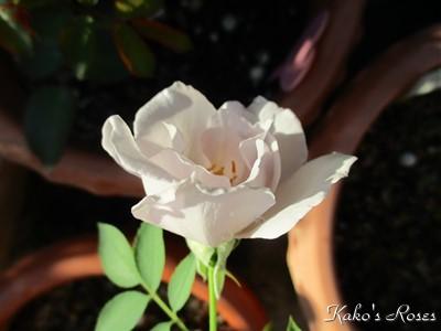 s-IMG_0522k1_20160909054225582.jpg