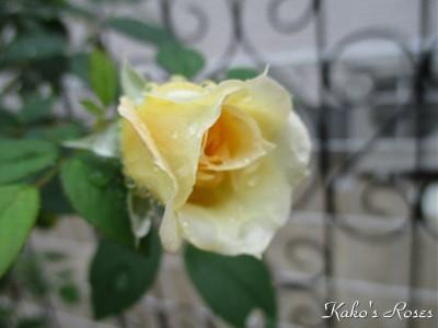 s-IMG_0964k1.jpg
