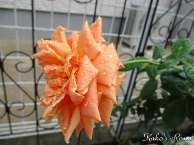s-IMG_0967k1.jpg