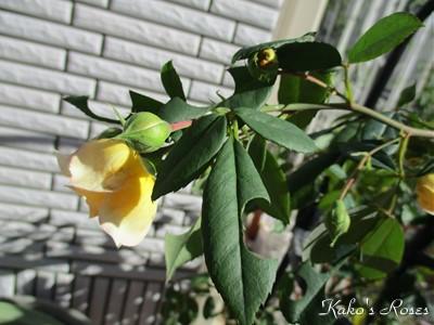 s-IMG_1301k1.jpg