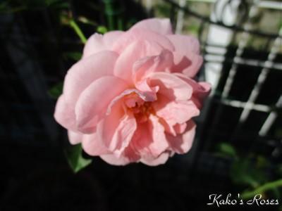 s-IMG_1388k1.jpg
