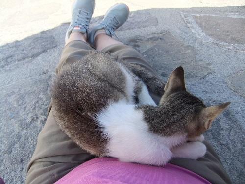 キモロス_猫トラップ (2)