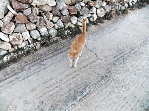 キモロス_宿のそばの猫さん