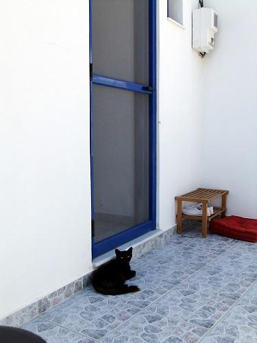 キモロス_ホリオの黒猫さん
