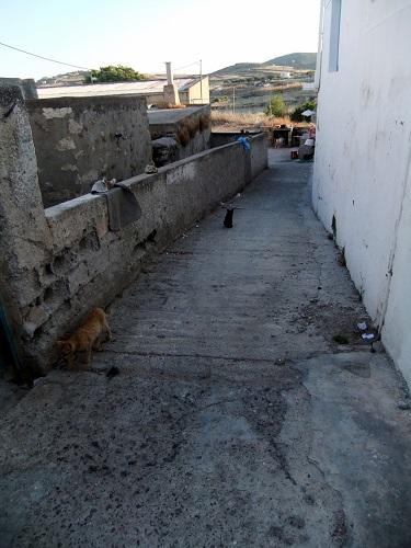 キモロス_ホリオの猫さん