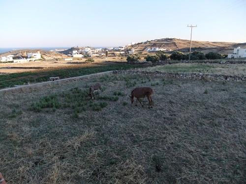 キモロス_宿「メルテミ」の裏