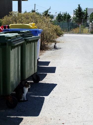 ミロス_ポロニアの猫さん (2)