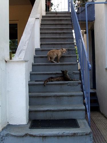 カラマタの猫さん