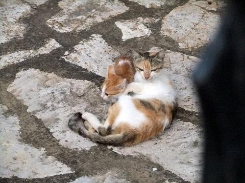 マヴロマティの猫さん親子