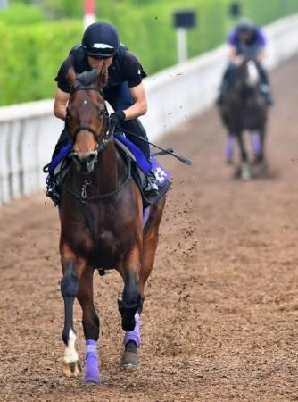 【競馬ネタ】それでは、無敗で弥生賞を制した馬のダービーでにの圧倒的成績をご覧ください