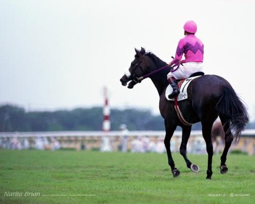 【競馬ネタ】芝1200M、芝2400M、芝3600M、ダート2000M 全てで重賞勝てそうな馬