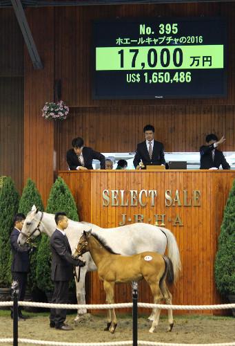 【セレクトセール】総帥、オルフェ×ホエールを1億7000万で落札wwwwwwwwwwww
