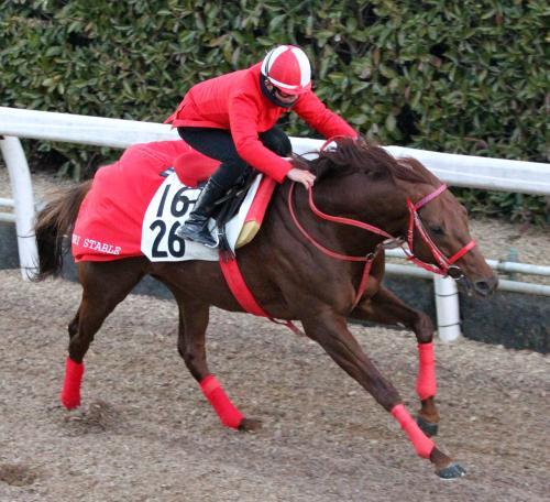 【競馬】森厩舎 ネロ