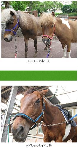 【競馬イベント】本日28日(木)に、小倉3冠メイショウカイドウさんが博多駅でトークショー開催