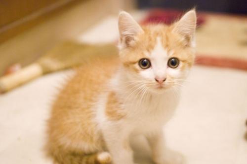【競馬ネタ】子猫はかわいいのに、大きくなるといらなくなるよな?