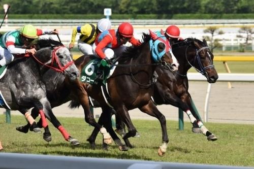【競馬】新潟記念・小牧太がダコールからひっそりと降板されている件wwwww